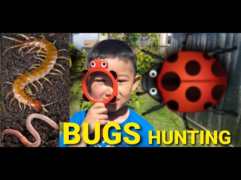Bugs Hunt/ Exploring Bugs and Earthworm with Charleson and Clarissa/ C Learn and Play/ Video For Kid