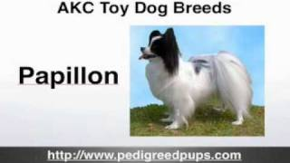 AKC Toy Dog Breeds  AKC Toy Dogs  Toy Dogs