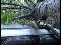 Дерево рухнуло на иномарку в Индустриальном районе Хабаровска. MestoproTV
