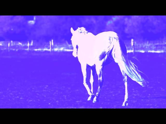 Horses by Vashti