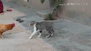 Курица против собаки и кошки борется смешные бои видео