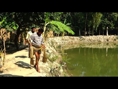 Net Fishing | Catching Fish With Cast Net | Net Fishing in the village (Part-171)