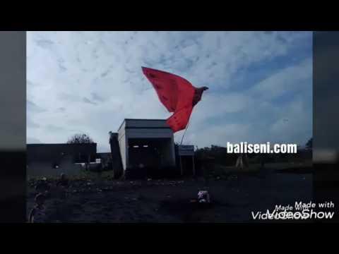 Layangan burung bali