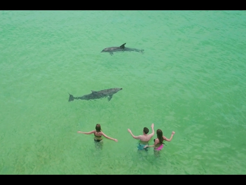 Dolphins, Champagne Pools & Ship Wrecks. What Moreton Island Could You Ask For?