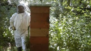 Tallest & Strongest Bee Hives Colonies In the World / Using the Rose Hive Method Beekeeping