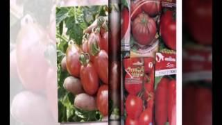купить семена овощей дешево(, 2015-02-08T16:59:37.000Z)