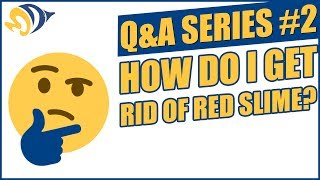 Q&A Series #2: How Do I Get Rid of Red Slime?