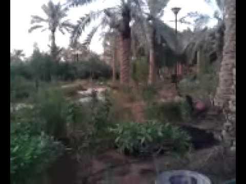 Riyadh Salam Park Bird Garden.mp4