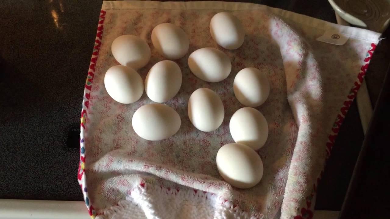 How To Easily Peel Hard Boiled Eggs Fast  Peeling Eggs For Dummies  Life  Hacks