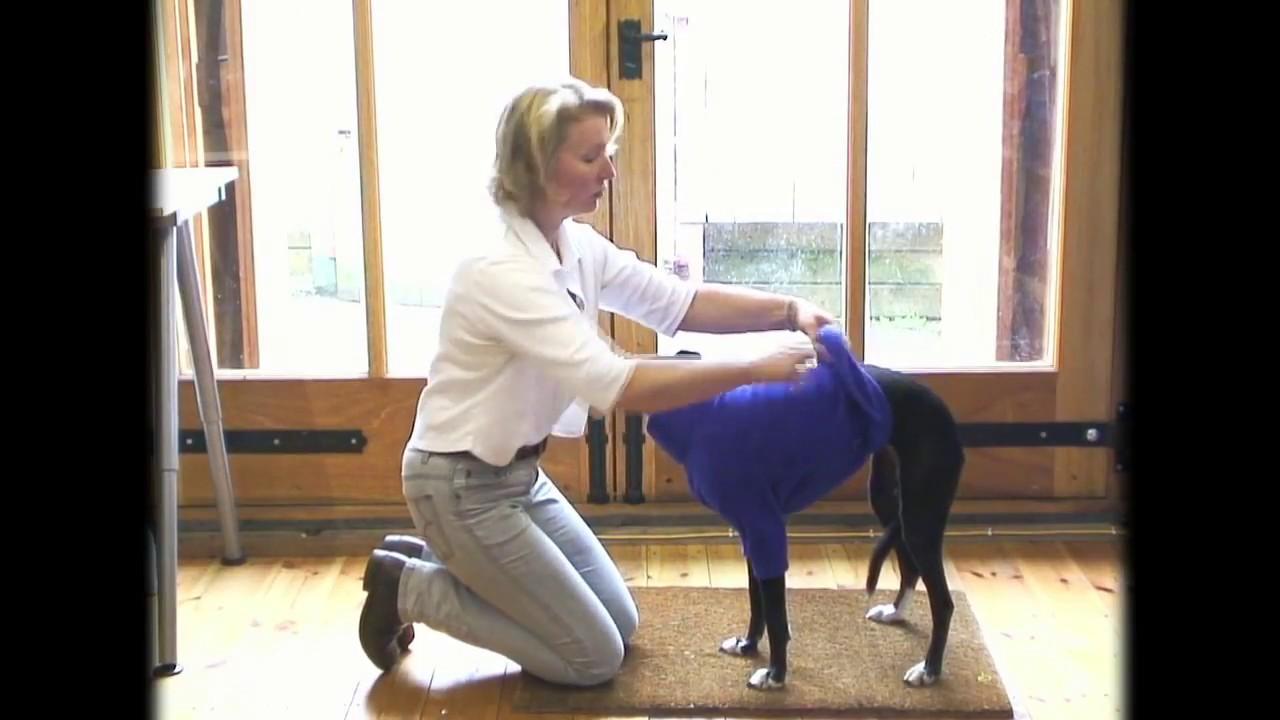 Einen Hunde Pullover ausziehen - YouTube