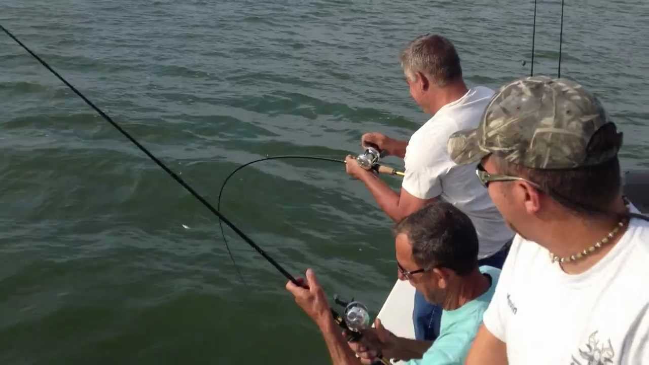 Freshwater fish lewisville tx - Hybrid Striped Bass Fishing Lake Lewisville Texas