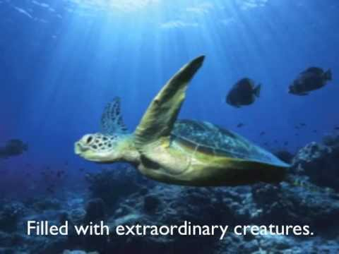 Oceanography Video