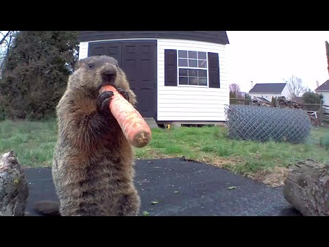 chunk-plays-the-carrot-flute