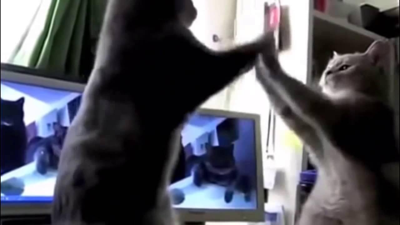 Backe Backe Kuchen Katzen Zuhause Image Idee