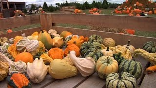 NJ Farms Attract Tourists with Corn Mazes, Pumpkin Picking