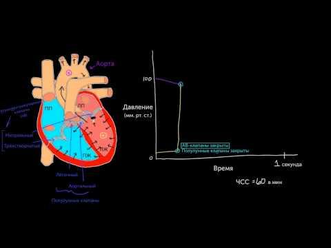Давление в левых отделах сердца. Часть 1
