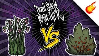 🍓 JUICY BERRIES vs NORMAL BERRIES - Which is Better? DON'T STARVE TOGETHER