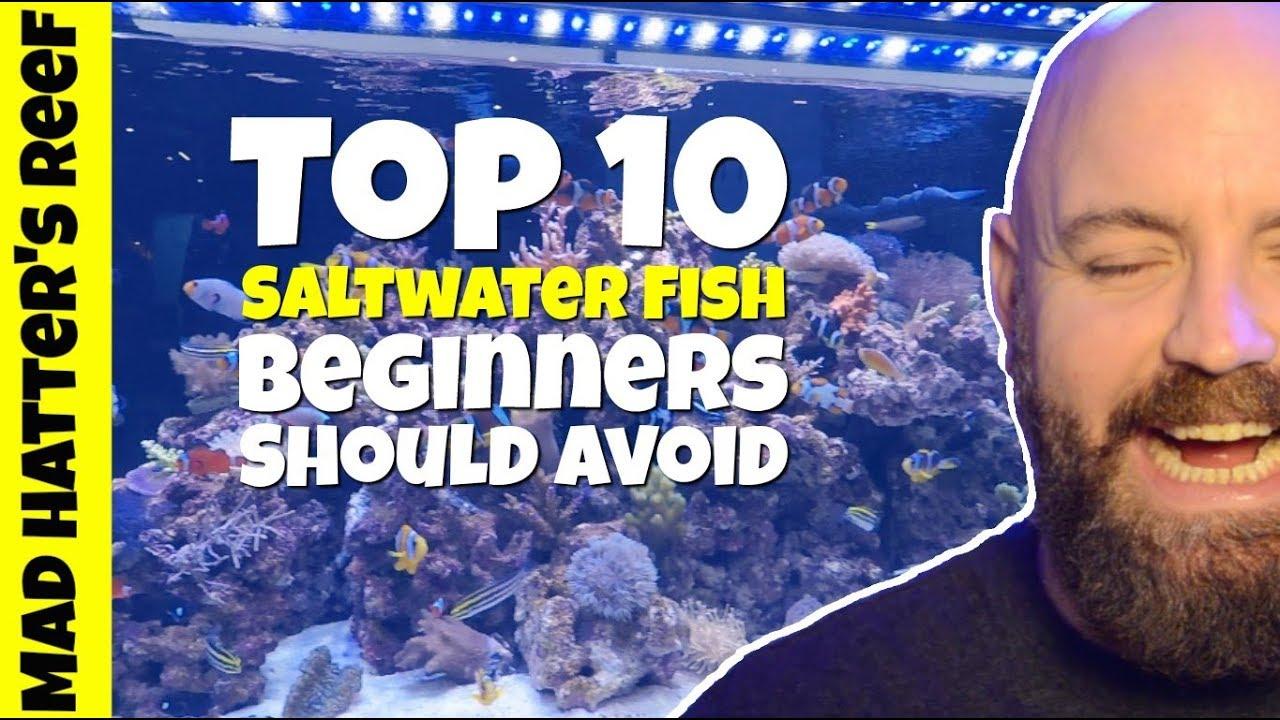 Saltwater Fishing Basics - Fishmaster Blog