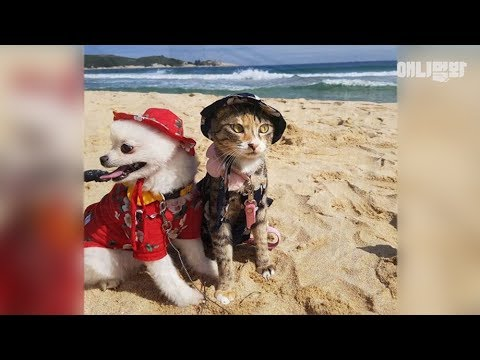 여행에-미치다옹-ㅣ-a-travelholic-dog-and-cat-go-camping-together