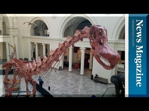 World's largest dinosaur MAXIMO in the Field Museum