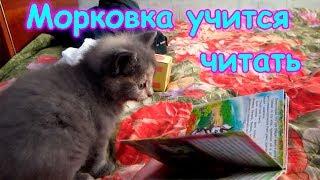 Котенок Морковка учится читать. (10.17г.) Веселая Анюта (Бровченко).