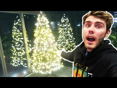 ZOE THINKS IT'S CHRISTMAS ALREADY...