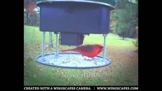 Everlasting Bird Feeder