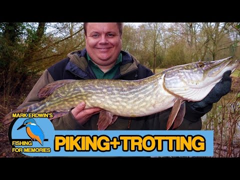 Pike Fishing And A Spot Of Winter Trotting (Video 79)