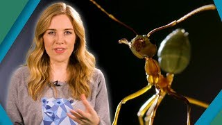 Why ants are formidable predators | Earth Unplugged