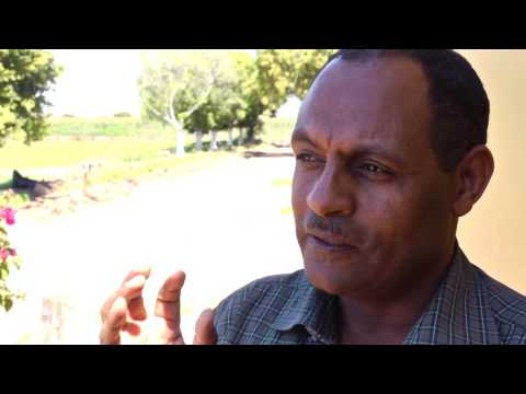 Fentahun Mengistu, EIAR -  Importance of Wheat Varieties for Ethiopian Farmers
