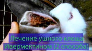 Лечение ушного клеща ивермектином у кроликов (Два способа)