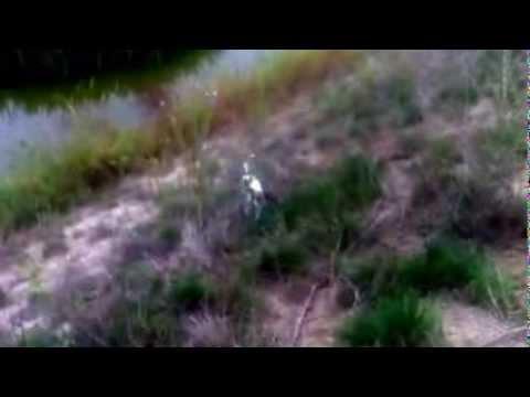 Jackie wild behavior - Jack Russell terrier