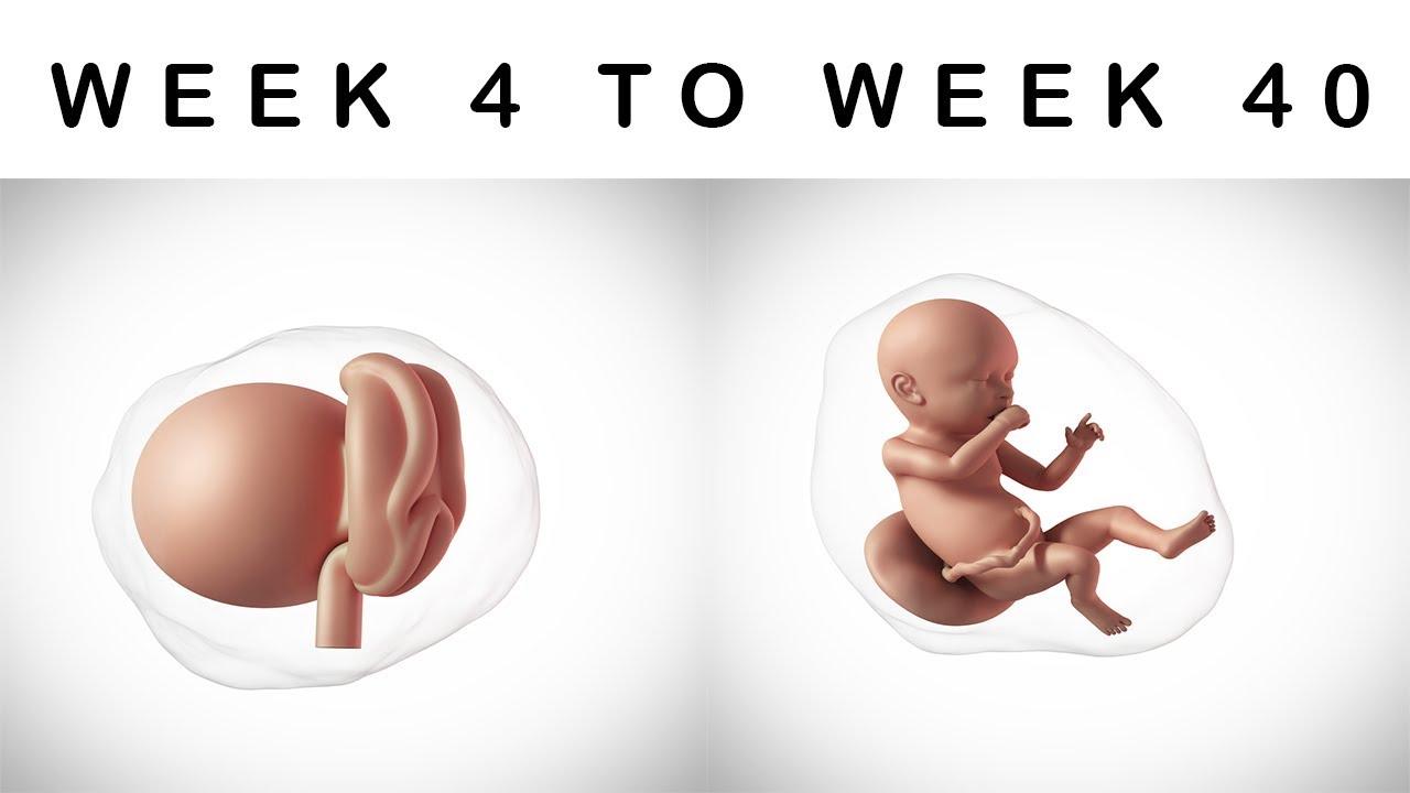 Watch My Baby Grow   DK UK
