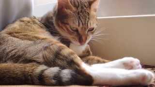 haly 貓-吃手手