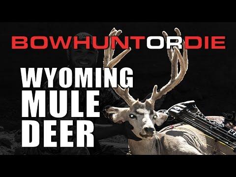 Wyoming Mule Deer Hunt    Stalking Up on Buck on Foot