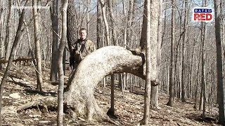 Strange Heartland History: Are Bent Trees Really Native American Trail Markers?