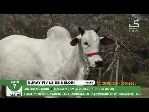 Lote 7 Nuray FIV LS