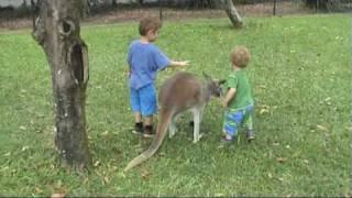 Kangaroo Kiss and Cuddle