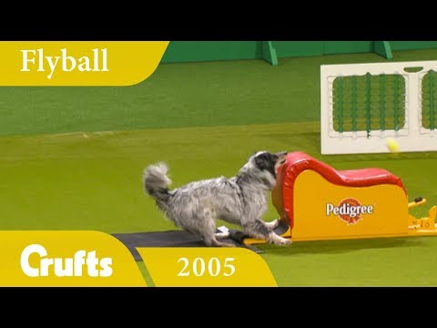 Flyball Team Final from Crufts 2005 | Crufts Classics