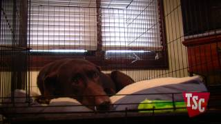 Selecting A Dog Crate