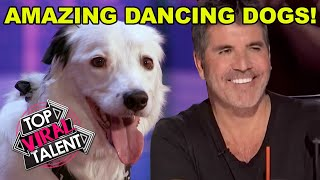 AMAZING DANCING DOG AUDITIONS on Got Talent