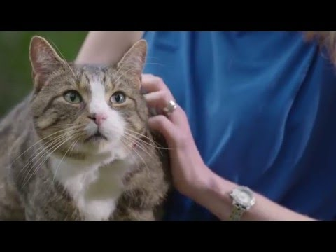 The Advantage Family: Lungworm In Cats, Signs, Consequences, And Solution