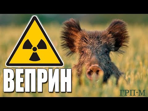 Радиоактивная зона. Веприн. Клинцовский район.