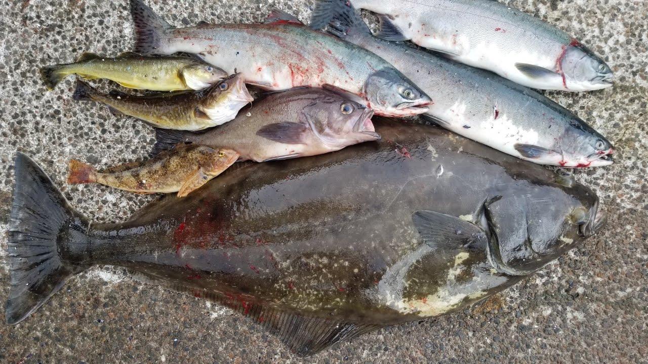Multi-species Kayak Fishing Catch & Cook: Halibut, Salmon, Rock Fish - Kayak fishing Alaska