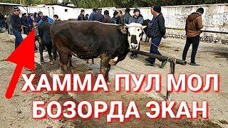 УЗБ ПУЛЛАР МАКОНИ МОЛ БОЗОР