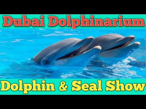 Dubai Dolphinarium ||  Dolphin & Seal Show || Get Updated