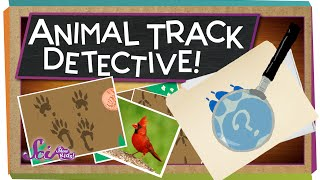 Animal Track Detective! | Science for Kids