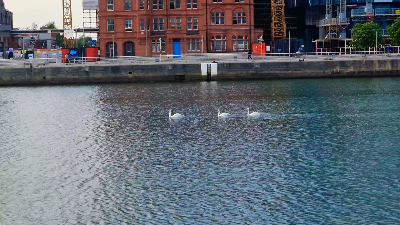 Children of Lir in Liffey River, Dublin