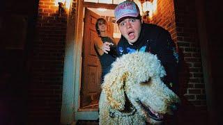 I STOLE CYRUS DOBRE'S DOG! | STEVE PEREZ