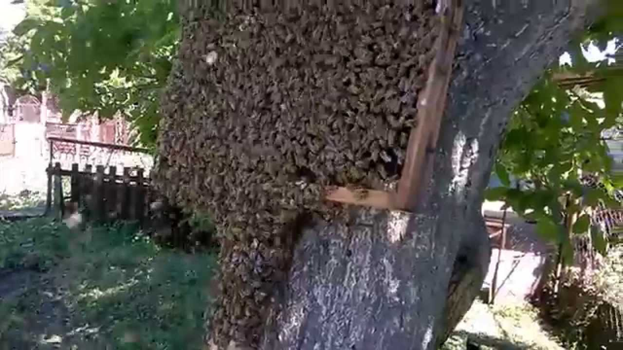 фото пчелиного привоя узбекистан многонационален